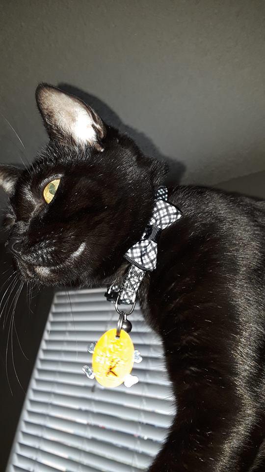 Kuros new collar